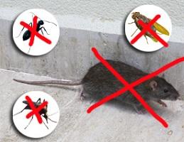 отпугиватель грызунов и насекомых